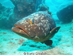 Grouper Fish by Baris Civelek 